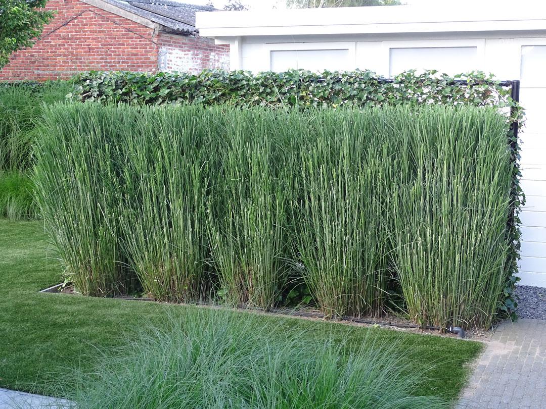 Zen Tuin Aanleggen : Tuinaanleg antwerpen tuinonderhoud groen op zn mooist hovenier